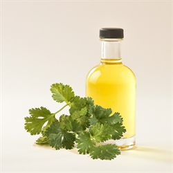 Picture of CILANTRO OIL